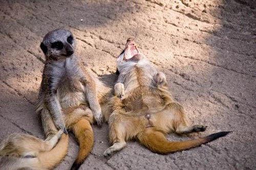 Imagens-e-fotos-engracadas--animais-40.jpg