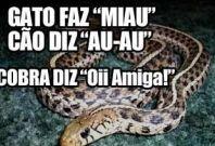 Cobra Diz €