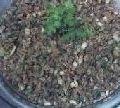 Receita Receita de Lentilha ao Molho Vinagrete e Sardinha