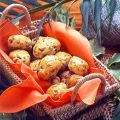 Receitas com azeitona