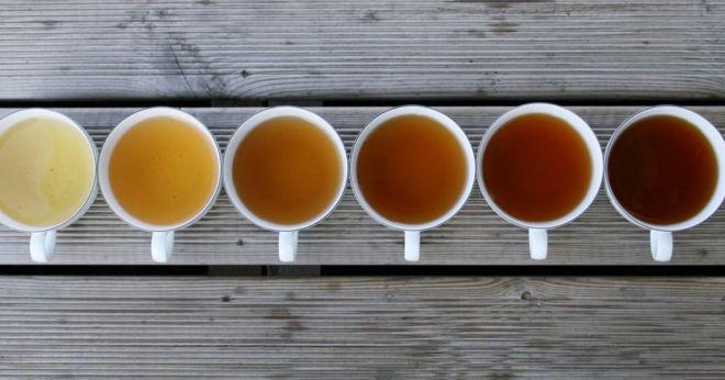 7 tipos de chás e a melhor hora do dia para tomar cada um deles