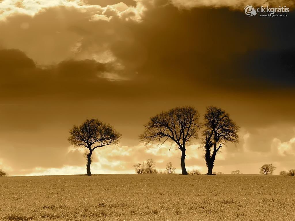 Árvores e tempo escuro