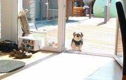 flagra-cachorrinho-porta-de-vidro