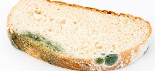 Xô mofo: Veja dicas para evitar que os pães mofem