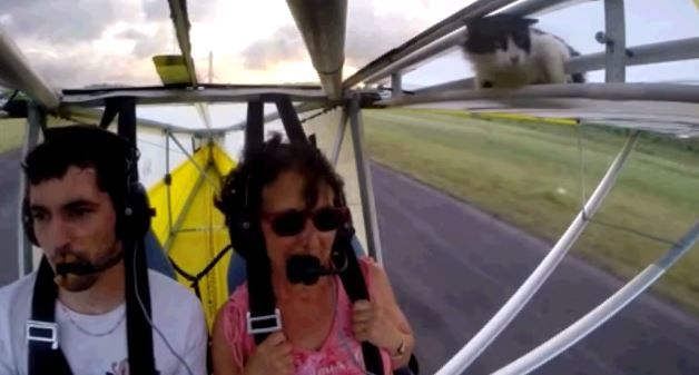 Vídeo do gatinho voando de ultraleve