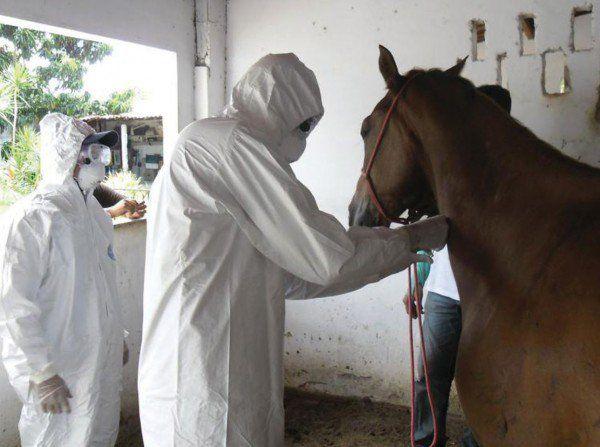 Cavalos - Mormo