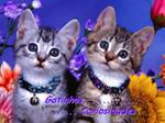 Gatinhos e Curiosidades