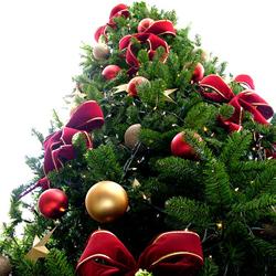 Textos sobre Natal