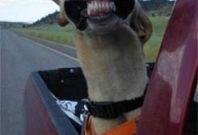 Cachorro Todo Sorridente Bom Dia!!!