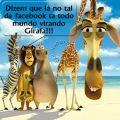 Girafa Facebook