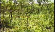 Animais do Pantanal - Parte 1