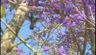 Animais do Pantanal - Parte 3