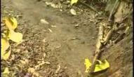 A Diversidade de animais do pantanal