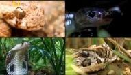 Os Animais Mais Perigosos do Mundo - Índia - Canal Odisseia