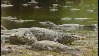 Animais do Pantanal - Parte 4