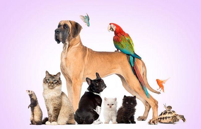 30 curiosidades do mundo animal que poucos conhecem