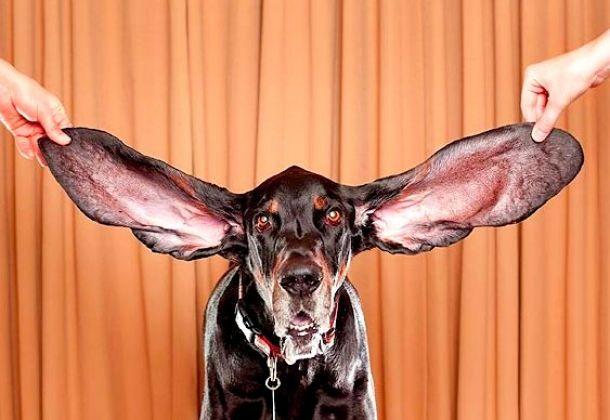 Veja recordes bizarros feitos por animais