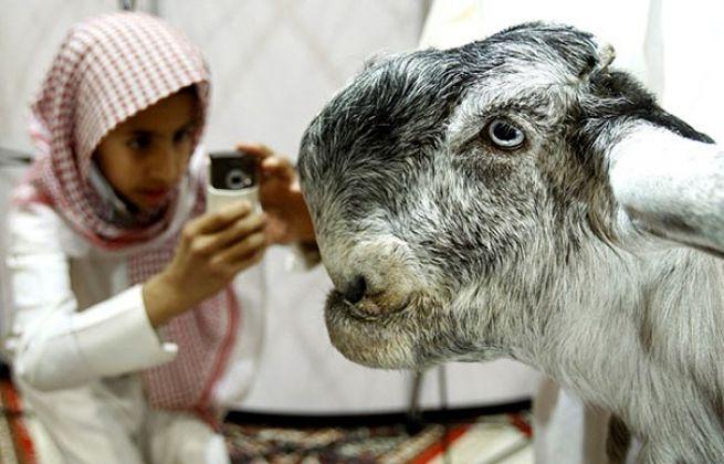 Conheça uma raça bizarra de cabra que parece um ser de outro mundo