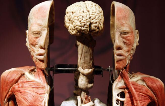 5 fatos curiosos sobre o corpo humano