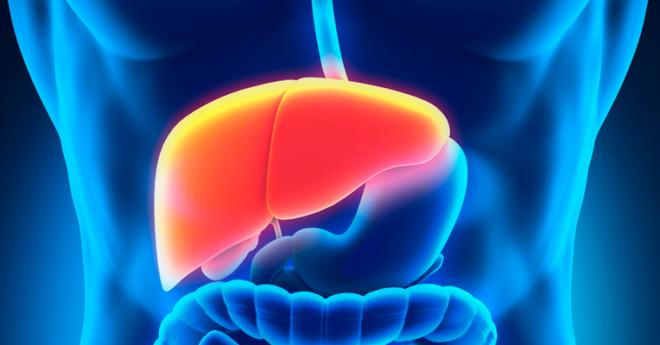 Curiosidades sobre o fígado humano