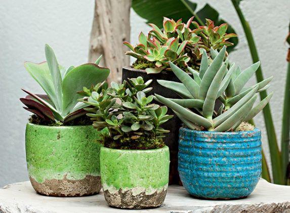 Dicas para cuidar de plantas suculentas dentro de casa