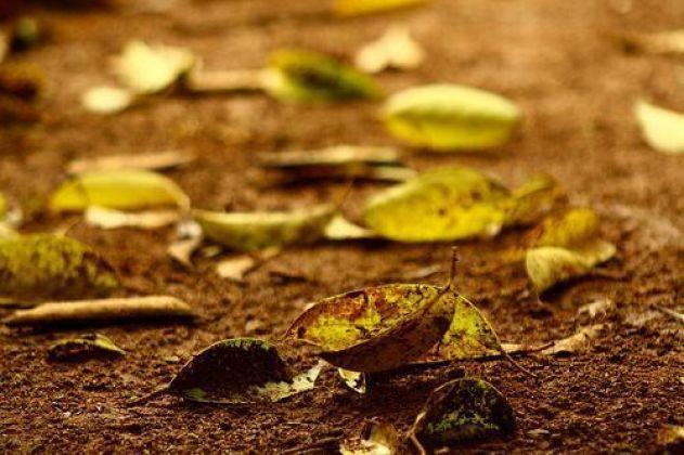 Como produzir cheiro de chuva ou de terra molhada?