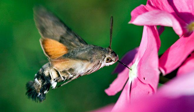 5 fatos estranhos sobre as mariposas