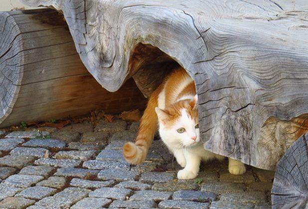 Por que felinos se escondem em locais escuros?