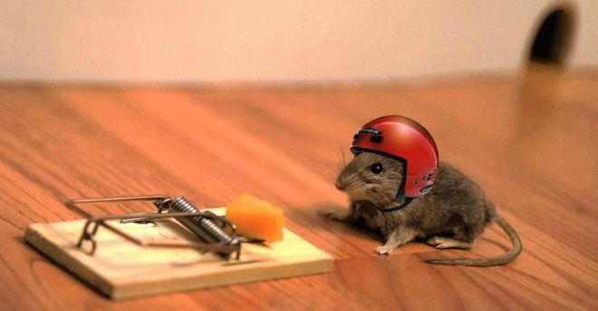 6 dicas para acabar com os ratos em casa