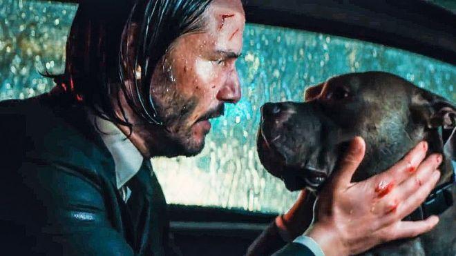 Confira algumas curiosidades sobre os cachorros de John Wick