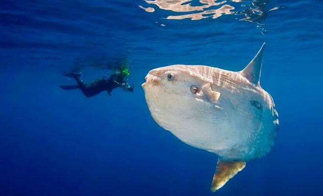 Conheça alguns tipos de peixes bizarros que existem na natureza