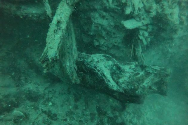 Floresta submersa: conheça o achado de 60 mil anos
