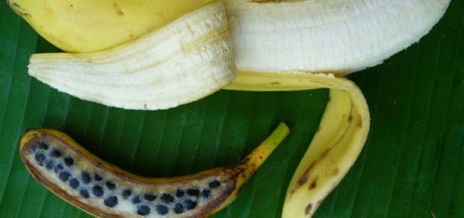 4 frutas que mudaram bastante com o passar do tempo
