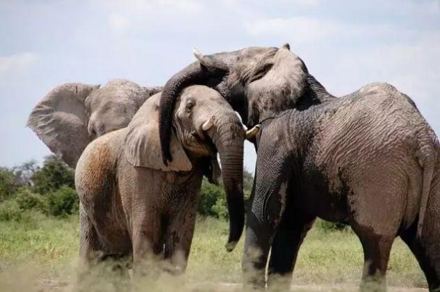6 curiosidades interessantes sobre os elefantes