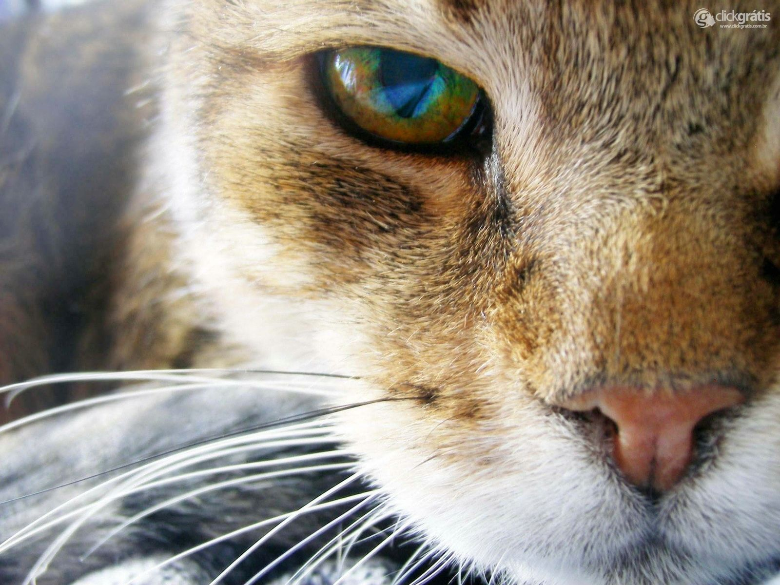 Olho de Gato