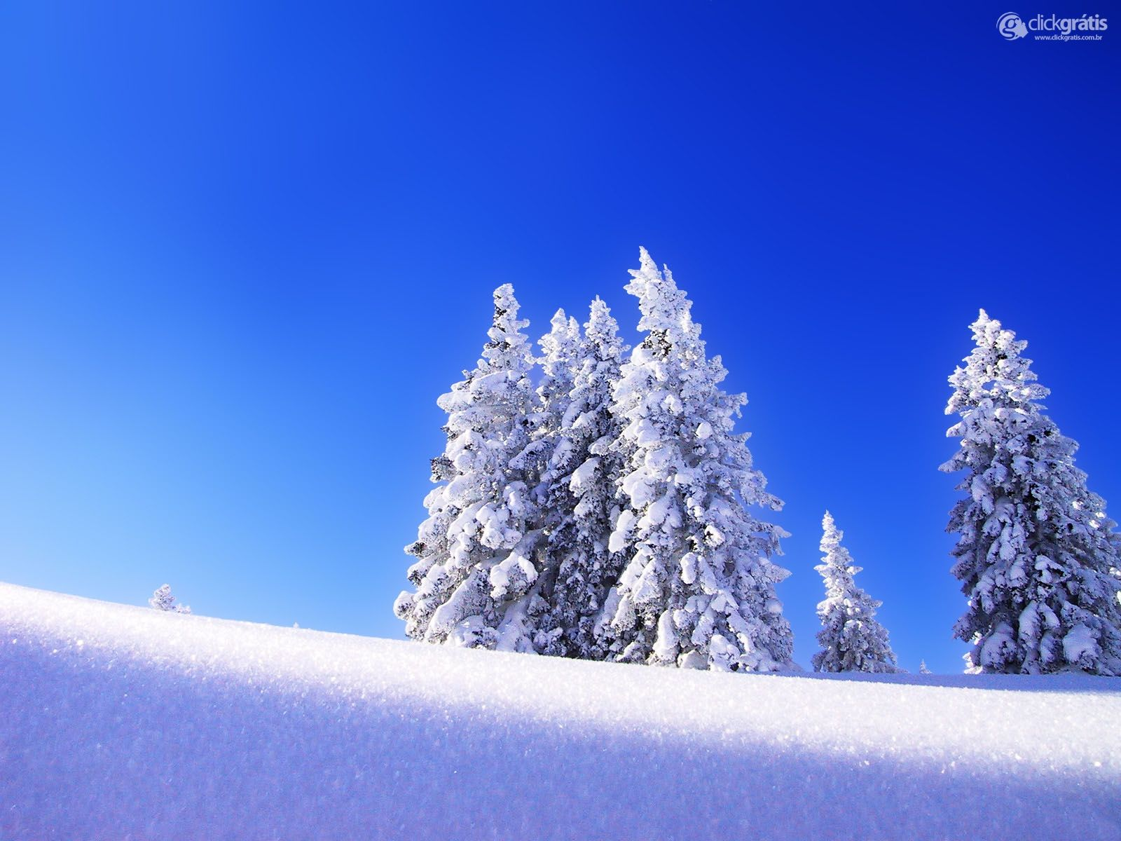 Pinheiro na Neve
