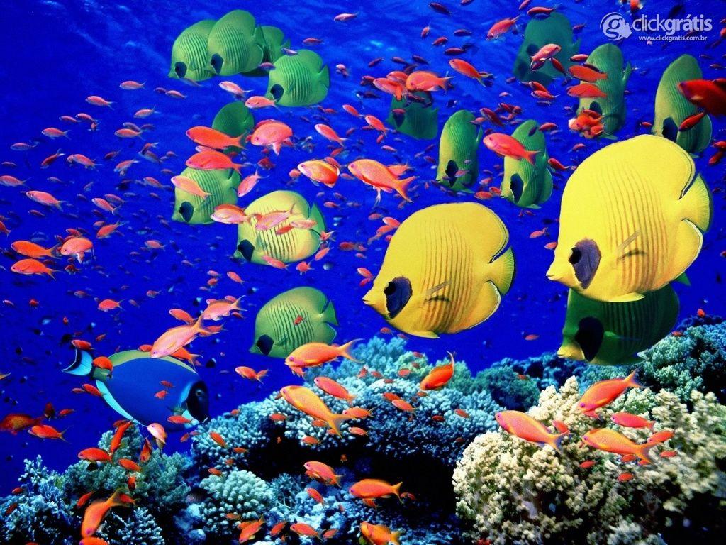 No fundo do oceano