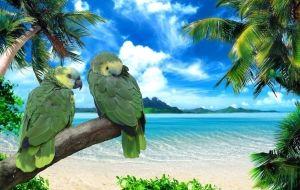 Papagaios na Praia