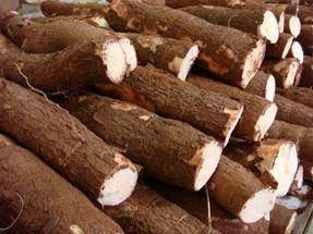 Conheça a origem e as diferentes utilidades da mandioca