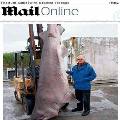 Britânico bate recorde de pesca de tubarão com anzol