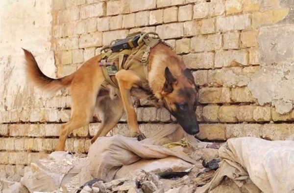 Cachorro-bomba
