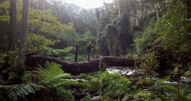 Lamington National Park – Austrália