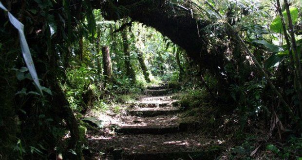 Monteverde Cloud Forest Reserve - Costa Rica