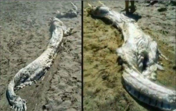 A carcaça da praia de Almeria