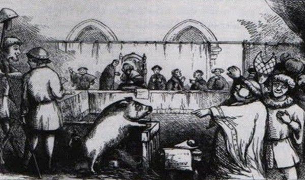 Animais sentenciados
