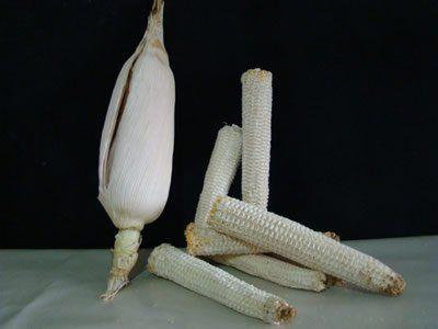 Espigas de milho para se limpar