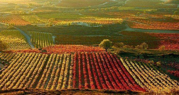 Rioja – Espanha