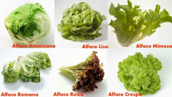 Os tipos de alface disponíveis no mercado e e as características de cada um