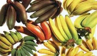 Entenda as diferenças entre os tipos de banana e saiba como identificar cada uma