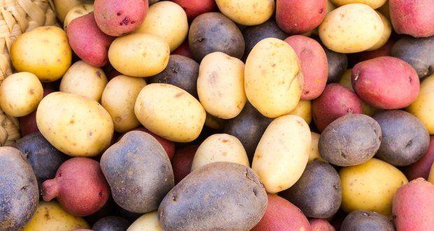 Escolha a batata certa